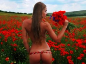 Nude in the poppy field sexy wallpaper
